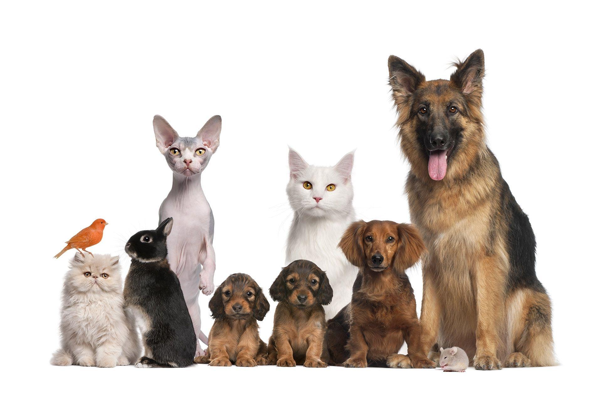 Clínica veterinaria en Málaga